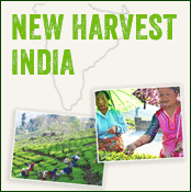 new harvest indian tea